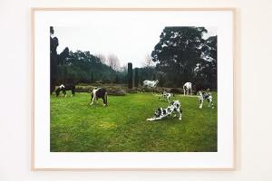 Point de vue @ Galerie Pictura | Cesson-Sévigné | Bretagne | France