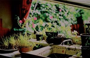 Jardins @ Ecole Maternelle | Ploubalay | Bretagne | France